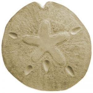 Sand Dollar Stepping Stone Mold